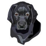 Cucciolo nero del laboratorio Fotografia Stock Libera da Diritti