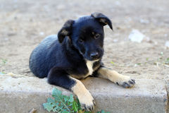 Cucciolo nero senza tetto Fotografia Stock Libera da Diritti