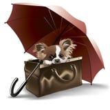 Cucciolo, ombrello, valise immagine stock