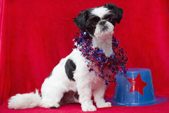 Cucciolo patriottico. Immagine Stock
