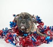 Cucciolo patriottico Immagine Stock