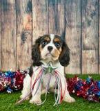 Cucciolo patriottico Fotografia Stock
