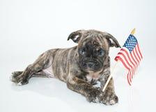 Cucciolo patriottico Immagini Stock Libere da Diritti