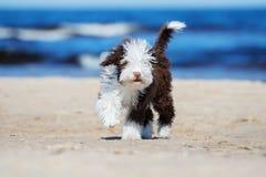 Cucciolo riccio adorabile su una spiaggia fotografia stock libera da diritti