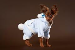 Cucciolo russo del terrier di giocattolo Immagini Stock Libere da Diritti