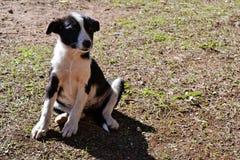 Cucciolo senza tetto Fotografia Stock