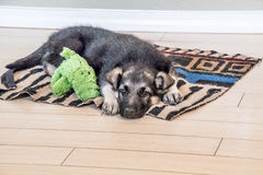 Cucciolo sonnolento e suo l'animale domestico pronti per un pelo Immagini Stock Libere da Diritti