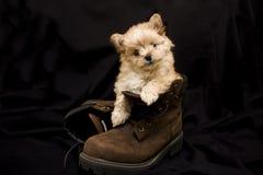 Cucciolo in stivale Immagini Stock