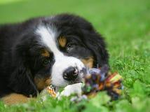 Cucciolo su un'erba. Fotografia Stock Libera da Diritti