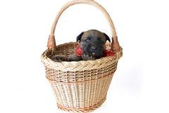 Cucciolo sveglio Immagine Stock Libera da Diritti