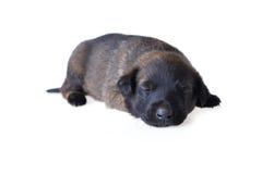 Cucciolo sveglio Fotografia Stock