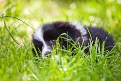 Cucciolo sveglio che si trova nell'erba immagine stock