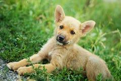 Cucciolo sveglio che si trova sull'erba Immagini Stock
