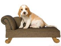 Cucciolo sveglio del cane da lepre che si siede sullo strato marrone Fotografie Stock