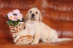Cucciolo sveglio del labrador con il caricamento del sistema di ceramica Immagini Stock Libere da Diritti
