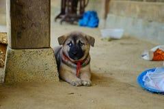 Cucciolo sveglio solo che si siede dalla colonna Fotografie Stock