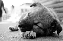 Cucciolo triste fotografia stock