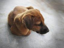Cucciolo triste che si siede da solo Fotografia Stock