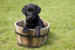 Cucciolo in un barilotto Fotografia Stock