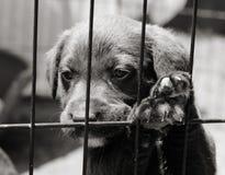 Cucciolo in una gabbia Fotografia Stock Libera da Diritti
