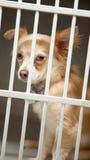 Cucciolo in una gabbia Immagini Stock
