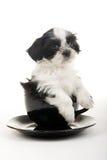 Cucciolo in una tazza Fotografia Stock Libera da Diritti