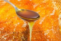 Cuchara con la miel en el fondo del panal Imagen de archivo libre de regalías