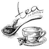 Cuchara de madera con las hojas de té stock de ilustración