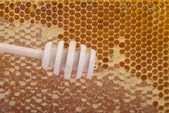 Cuchara de madera para la miel Foto de archivo libre de regalías