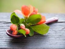 Cuchara de postre romántica con una flor fresca fotografía de archivo libre de regalías