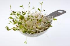 Cuchara de sopa de brotes picantes de la alfalfa y del rábano Imagen de archivo