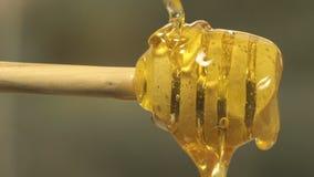 Cuchara gruesa orgánica sana de Honey Dipping From The Wooden