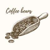 Cucharada con los granos de café Foto de archivo libre de regalías