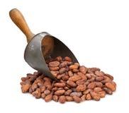Cucharada del grano de cacao Imagen de archivo libre de regalías