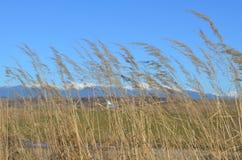Cuchilla de la hierba Imagen de archivo
