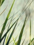 Cuchilla de la hierba Imagen de archivo libre de regalías