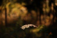 Cuchilla de la hierba fotos de archivo