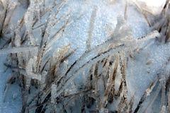 Cuchilla de la hierba congelada Fotografía de archivo