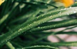 Cuchilla de la hierba en gotas de agua foto de archivo libre de regalías