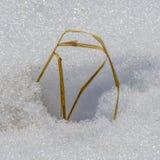 Cuchilla de la hierba seca Imágenes de archivo libres de regalías