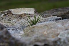 Cuchillas de la hierba Fotos de archivo libres de regalías