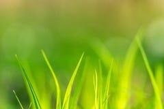 Cuchillas de la hierba Foto de archivo