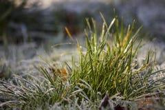 Cuchillas de la hierba heladas imagen de archivo
