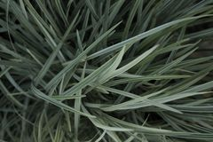 Cuchillas de la hierba perfectas Imagen de archivo
