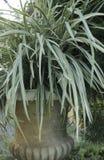 Cuchillas de la hierba perfectas Fotos de archivo libres de regalías