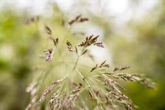 Cuchillas de la hierba que florecen en primavera en un campo español fotografía de archivo