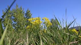Cuchillas de la oscilación de la hierba en el viento en un prado, en dunas de arena de Baden-Baden metrajes