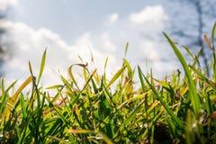 Cuchillas retroiluminadas de la hierba verde de Sunny Sky Clouds Behind Bright molidas Foto de archivo