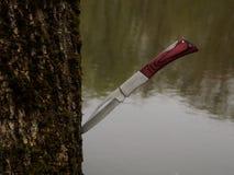 Cuchillo en el árbol Fotografía de archivo