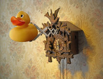Cuckoo Clock with rubber duck Stock Photography
